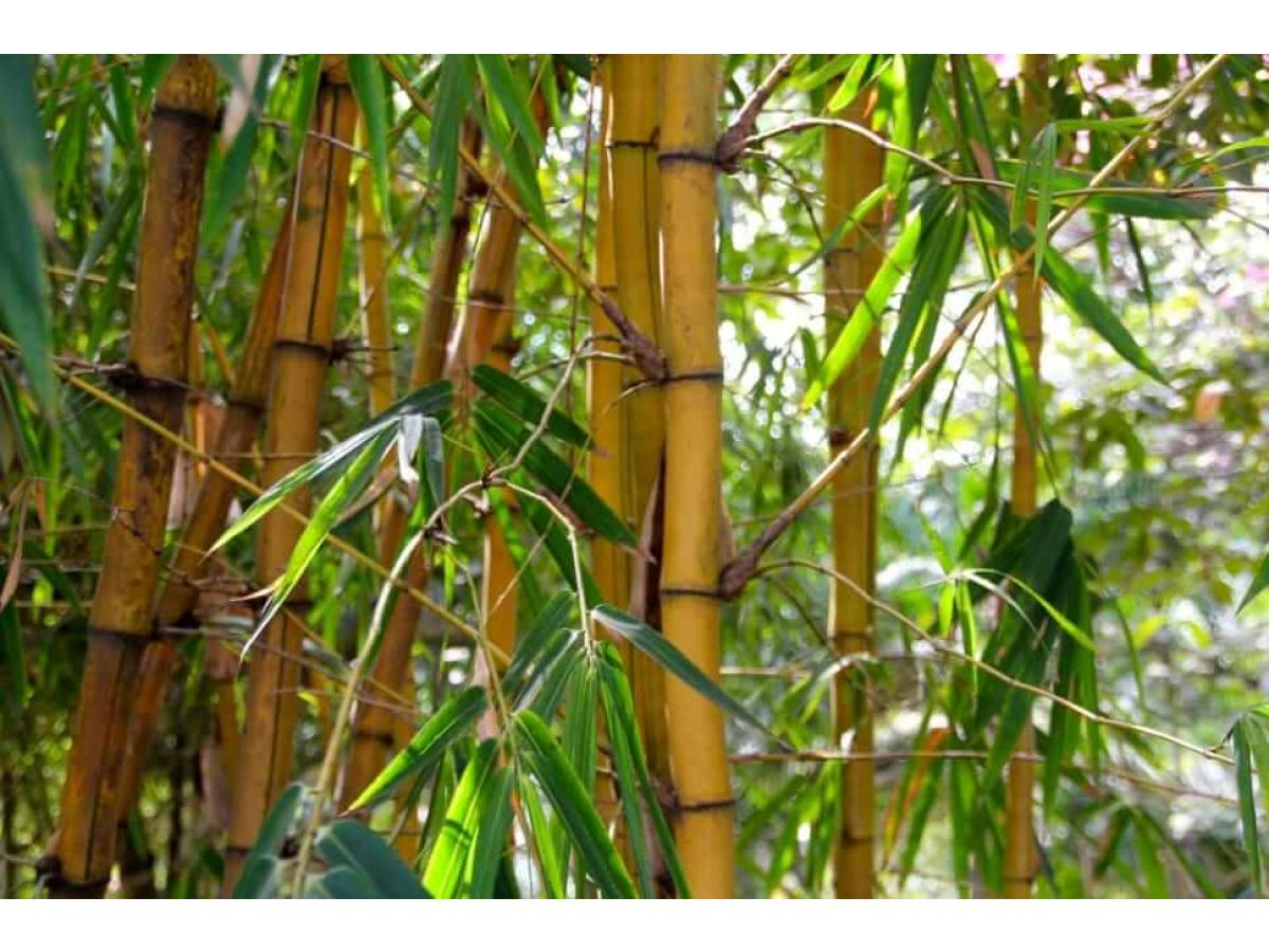 Hainele din bambus